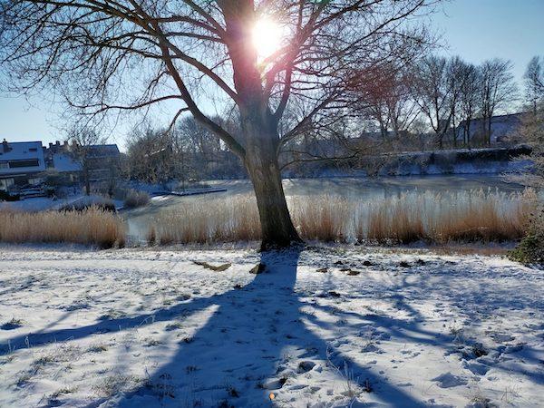 winter-natuur